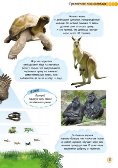 Познаём и исследуем: Животный мир