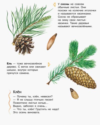 Лес. Энциклопедия дошкольника