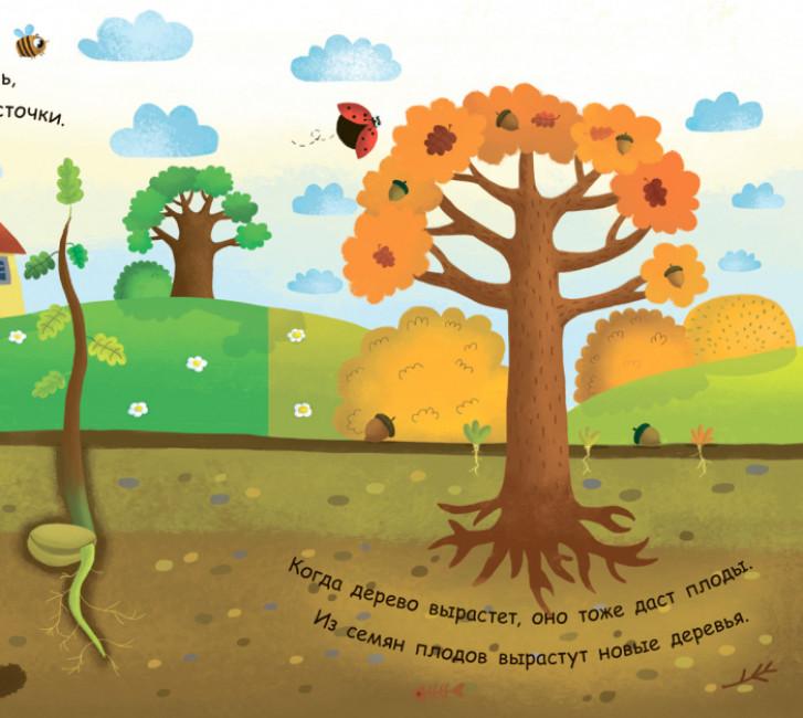 Моя первая энциклопедия. Как вырастает дерево?
