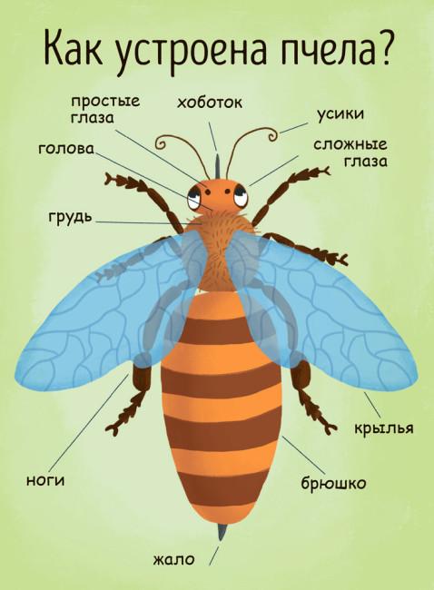 Моя первая энциклопедия. Как получается мёд?