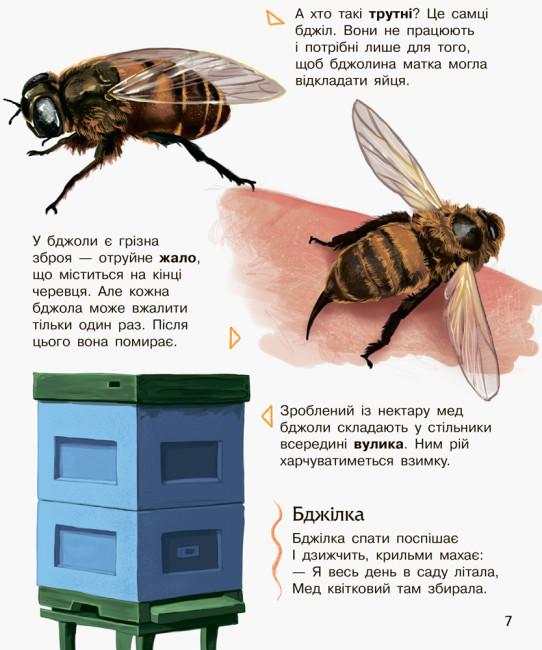 Комахи. Енциклопедія дошкільника