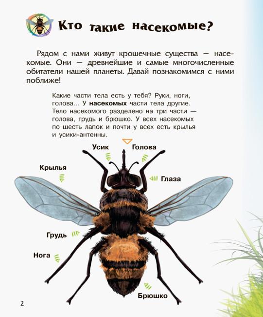Энциклопедия дошкольника. Насекомые