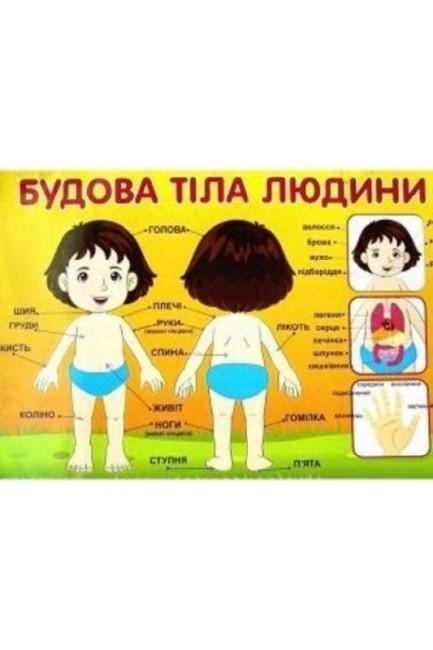 Плакат. Будова тіла людини