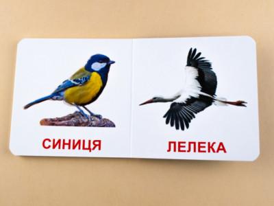 Книжка для найменших. Птахи