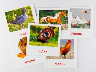 Картки міні з мобільним додатком. Домашні тварини
