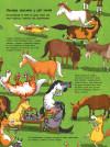 Усе про коней... і не тільки