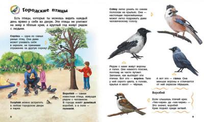 Энциклопедия дошкольника. Птицы
