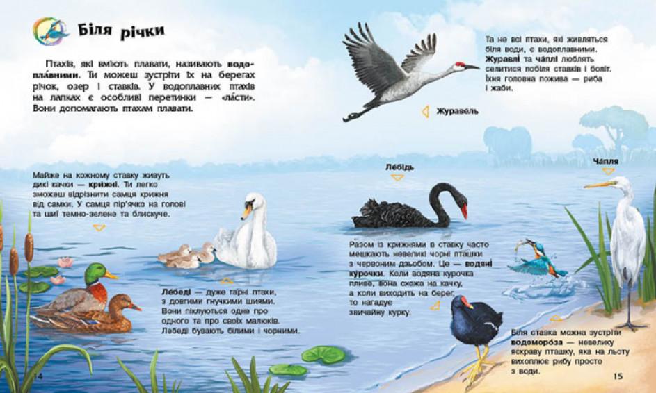 Енциклопедія дошкільника. Птахи